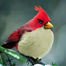 natural_angrybird_by_mohamed-raoof-01