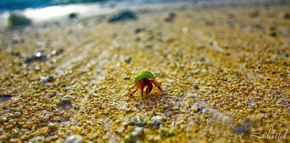 IL_Crab