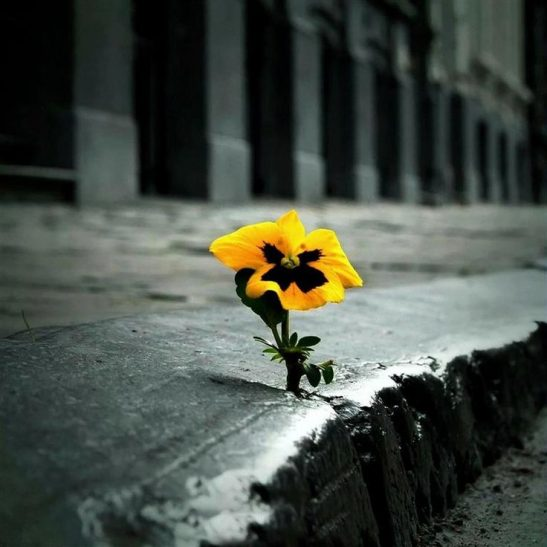flower through the cracks
