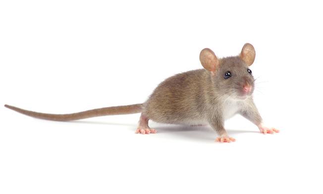 pg_mice