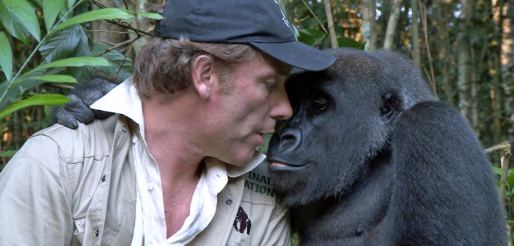 tc_gorilla-reunion